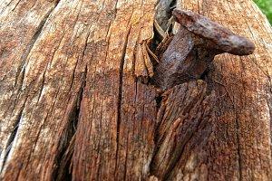 Nail and rotten wood