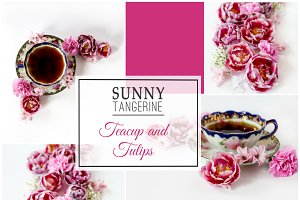 Stock Photos- Teacup Tulips Bundle