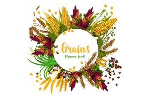 Vector grains fresh organic food poster