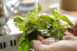 A person washing basil
