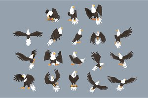 Bald Eagle Image Set On Grey Background