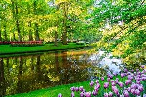 spring pond in park