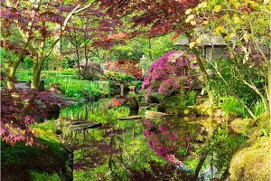 japanese garden in The Hague