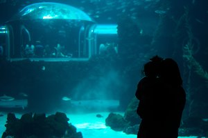 People visiting aquarium