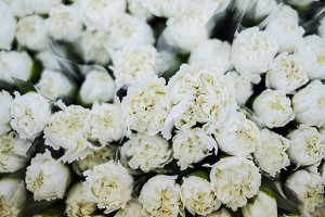 White carnation flowers background