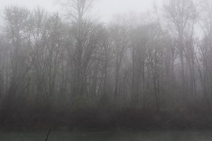 Foggy Days 8