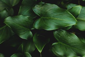 Lush Green Tropical Leaves