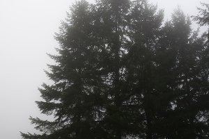 Foggy Days 6