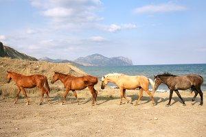 Wild horses in Crimea