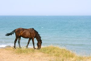 Horse on the the seashore