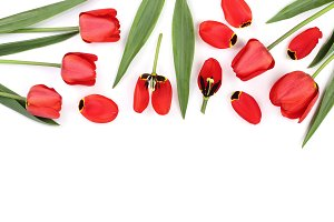 Beautiful red tulips on white background with copy space for text. Top view, flat lay