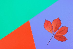 Minimalistic concept of autumn. Dry red autumn leaf on a multi-colored pastel background.