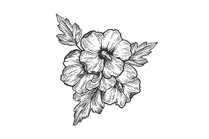 Hibiscus flower engraving vector illustration