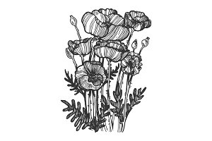 Poppy flower engraving vector illustration