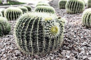 Closeup Of Green Cactus Plant