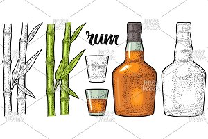 Glass and bottle of rum with sugar cane. Engraving