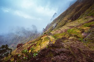 Rugged mountain peak overgrown with verdant grass and encase by the fog. Some plants growing in foreground. Xo-Xo Valley, Santo Antao Island, Cape Verde Cabo Verde