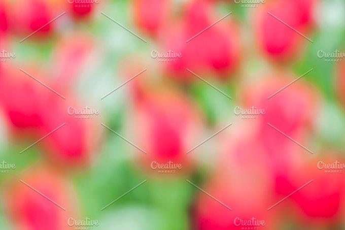 Defocus of fresh colorful tulip - Nature