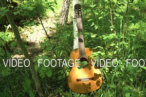 Acoustic guitar in the woods.