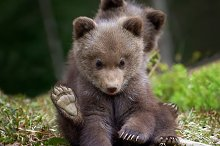 Bear by Volodymyr Burdiak in Photos