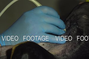 Ultrasound diagnostic in veterinary clinic.