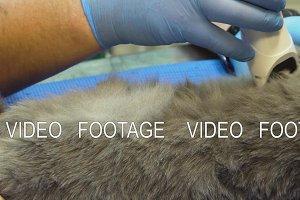 Ultrasound diagnostic in veterinary clinic.