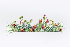 Summer tropical design border