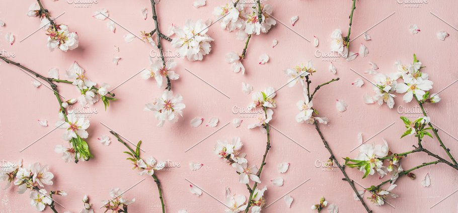 Spring Almond Blossom Flowers Over Light Pink Background Wide