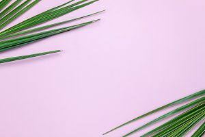 Top view palm leaf nature background