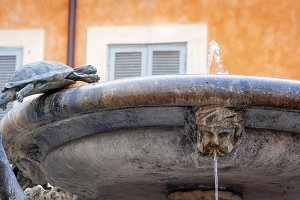 turtles fountain in Rome