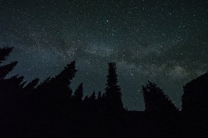 Milky Way over Coniferous Forest