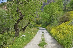 path of spring