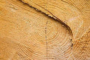 Cracked wooden texture