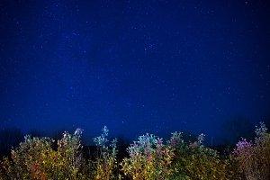 Autumn forest under dark night sky