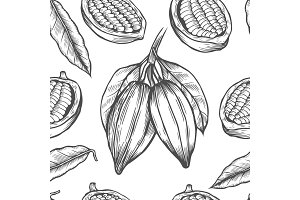 Vector Cocoa tree illustration