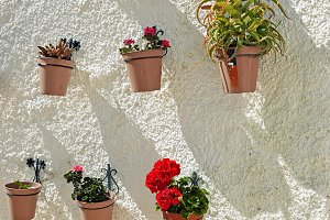 Flowers in pots on white wall