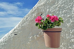 Flower in pot on white wall