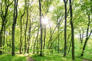 Sunny forest with green trees