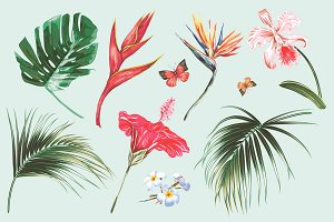 Tropical exotic illustrations