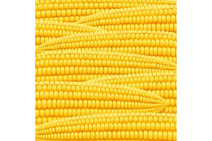 Corn cob. Organic food pattern.
