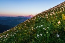 Daffodils in the mountains by Dreamy Pixel in Nature