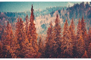 Gorgeous autumn landscape with pine trees forest