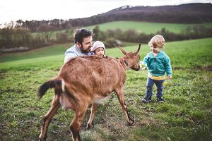 A father and his toddler children with a goat outside in spring nature.