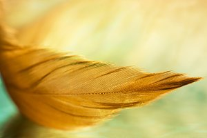 A gentle feather with warm shades on the glass table. A beautiful stylish macro. A selective focus