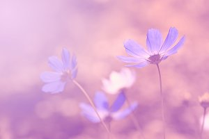 Blue toned flowers on a beautiful background. Selective soft focus.