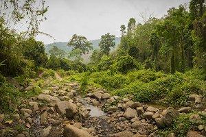Lush Green Jungle with Creek