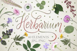 Herbarium. 60 real herbarium element