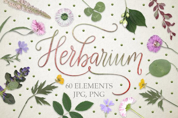 Graphics: Red Ink - Herbarium. 60 real herbarium element