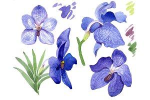 Vanda blue magic PNG watercolor flow