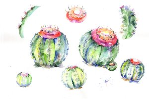 Green tropical cactuses PNG set